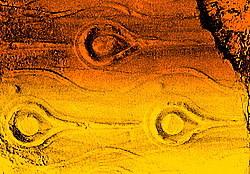 Autumn2006pics_043_2